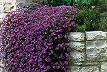 Gardening / Who doesn't love a beautiful garden?
