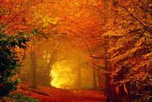 Favorite Things About Fall / by Keshia Call