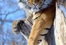 Animal love <3 / by Erin Johnson