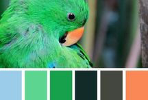Pattern and Color Inspiration!