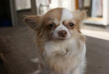 >>puppy / by Ashley Riah
