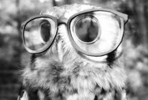 OWLS / Dedicated to Owls.  / by Rebecca Lashmett