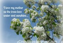 Mother's Day / Mother's Day Gifts Ideas for Celebrating Mother's Day Quotes for Mother's Day