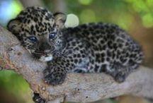 Too Cute - Animals / by Amanda GC