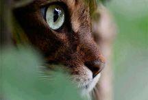Kitties!!!!!! / Only the cutest of kitties!
