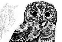 Owly moly