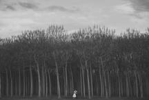 Wedding Photography I love! / by Nicole Harrison