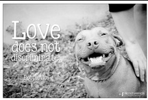 Animal Image Quotes / My images of shelter/rescue animals with some quotes that I love.   Please view all of my rescue work at: www.facebook.com/nicoleharrisonphotography  / by Nicole Harrison