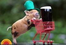 "St. Patricks Day Fun / ""May the hinges of our friendship never get rusty. And our ale never turn musty."" ~Irish Toast"