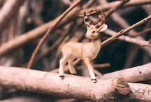 2015 Photography Artists / Big World Photo, Deadly Creative, and Tiny Deer Studio