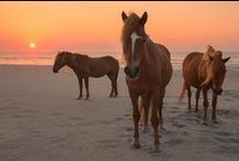 Assateague / One of the most beautiful and natural places on earth.  / by Beach and Beyond