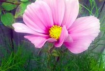 Flowers I 'picked' in my travels...Pink