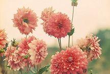 "FlowerFun / ""The earth laughs in flowers."" -R.W. Emerson-"