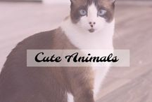 Cute Animals { squish them } / All things cute and fuzzy.