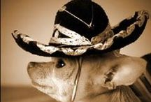 Ay Chihuahua !!!!!!!!!!! / by Lisa Duran