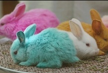 Easter Please!