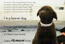 Animal Rescue Site / .... / by Marti Reid