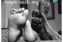 Canine Caregivers / Dogs are some of the best healers around!