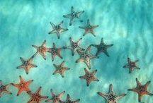 Coastal Inspiration / Our favorite travel ideas - Sirenia Style! http://www.annamariaislandhomerental.com https://www.facebook.com/AnnaMariaIslandBeachLife Twitter: https://twitter.com/AMIHomeRental