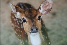 The deer in me, me in the deer