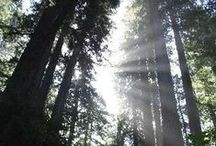 Oh the Redwoods...! / by Hedy Moore
