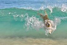 Laugh it Up! / Coastal Humour - Sirenia Style! http://www.annamariaislandhomerental.com https://www.facebook.com/AnnaMariaIslandBeachLife Twitter: https://twitter.com/AMIHomeRental