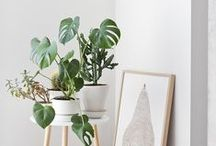 botanical / all things plants for the green fingered.
