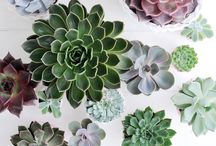cacti + succulents / cacti and succulent inspiration and growing tips.