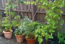 Den lille have / Billeder fra min lille have, som jeg skriver om på: http://www.denlillehave.com/