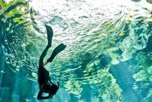 Aquatic Love