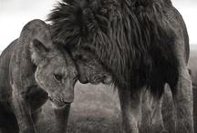 MAMA #Africa