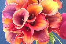 Flower Power!!! / by Roquel Peiffer