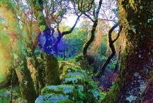 Nature + Travel + Landscape