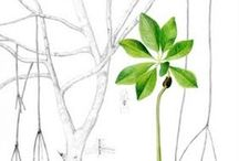 Botanical and Scientific illustration