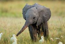Elephants Are My Lucky Charm / by Queenie Baxter
