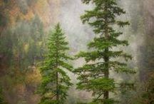 Puut mettät niityt / Mettämaisemat pusikoit niityt kukkakedot