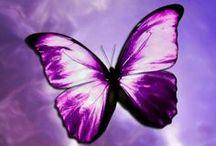 Villielläimet perhoset linnut