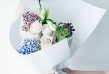bloom ||