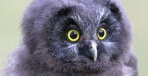 Owl Magik / Capturing the spirit of raptor animale ...
