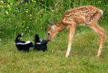 Amistades increibles / Amistades entre animales de diferentes especies