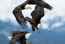Photography - ANIMALS / National Geographic style AWE