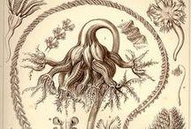 Weird Flora / Visual inspiration for alien flora.