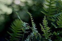 plants / by Sophie Elizabeth