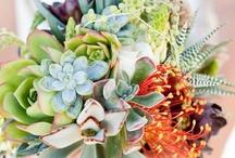 Bouquets: Succlent