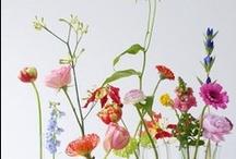 Flowers / Favorite flowers, bouquet arrangements + floral art.