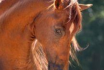 Wild Horses / by Lisa Kamolnick