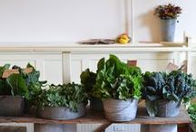 Garden: Containers / Container gardening inspiration for growing fruit, flowers and vegetables in small spaces.