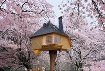 Tree Houses / Tree houses that inspire