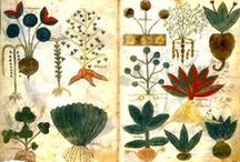 Botany / Drawings and collections of botanical drawings, photographs, and catalogs