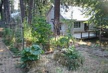 Garden: Straw Bale  / Investigating the allure of straw bale gardening.  No weeding, tilling, or squatting.  Is it too good to be true?